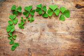 Green shamrock leaves on wooden background — Stock Photo