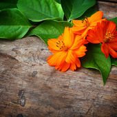 Green leaves and orange flower on wooden background — Stock Photo