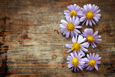 Purple flowers on wooden background — Stock Photo