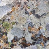 自然石のテクスチャ — ストック写真