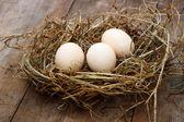 Three eggs in the nest — Stock Photo