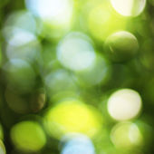 Natural green blured background with bokeh — Stockfoto