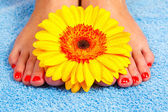 Pedicure on foot — Stock Photo