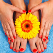 Stock Photo: Manicure and pedicure