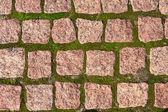 Granite pavers with grass — Stock Photo
