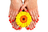 Pedicure feet of a young woman — Stock Photo