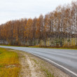 Stock Photo: Autumn asphalt road