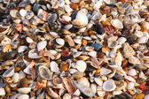 Background of shells — Stock Photo