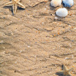 Background of sand shells and starfish — Stock Photo