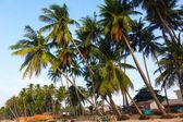Beach, palm trees and sky — Stock Photo