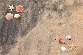 Background of sand shells and starfish — Stock fotografie