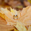 Stock Photo: Wedding rings on fall foliage