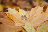 Wedding rings on fall foliage — ストック写真