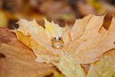 Wedding rings on fall foliage — Stock Photo