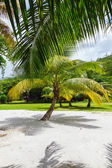 Palm tree on a tropical white sand seychelles — Stock Photo