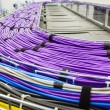 Large group of lilac utp cables — Stock Photo #50421951