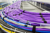 Large group of lilac utp cables — Stock Photo