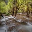 The Nature Stream — Stock Photo