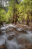 The Nature Stream — Stock Photo
