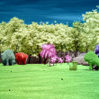 Infrared pictures of park. — Stock Photo