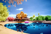 Infrared photo inside a park with reflection. — Stock Photo