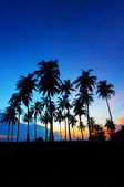 Sunrise at tropical beach. — Stock Photo
