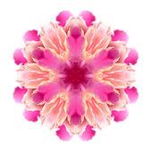 Beyaz zemin üzerine çiçek mandala — Stok fotoğraf