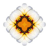 White flower mandala — Stock Photo