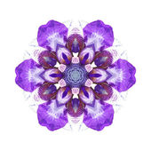Violet flower mandala — Photo