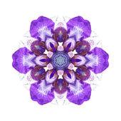 Violett blomma mandala — Stockfoto