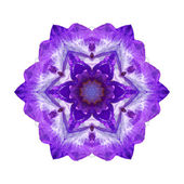 Violet flower mandala — Stock Photo