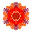 Stock Photo: Flower mandala