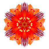 Flower mandala — Stock Photo