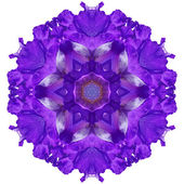 Flower mandala — Stock Photo