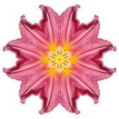 çiçek mandala — Stok fotoğraf