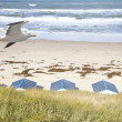 Stock Photo: Dutch little houses on beach with seagull in De Koog Texel, Netherlands