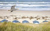 Dutch little houses on beach with seagull in De Koog Texel, The Netherlands — Stock Photo