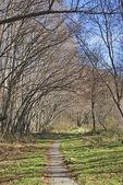 Rural pathway — Zdjęcie stockowe