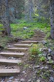 Wooden steps — Foto Stock