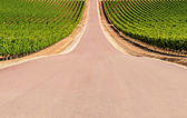 Road crossing a vineyard — Stock Photo