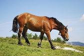 Doorbladeren paard — Stockfoto