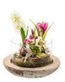 Spring Deco — Stock Photo