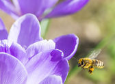 Bee in Flight — Stock Photo