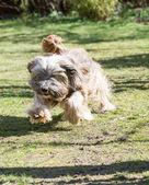 Funny Dog Jump — Stock Photo