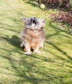 Dog Action — Stock Photo