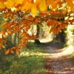 Autumn Path — Stock Photo #13926503