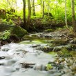 Woodland stream — Stock Photo