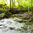 Woodland stream — Stockfoto