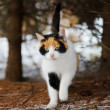Stock Photo: Wild cat in woods
