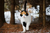 Wild cat in the woods — Foto Stock